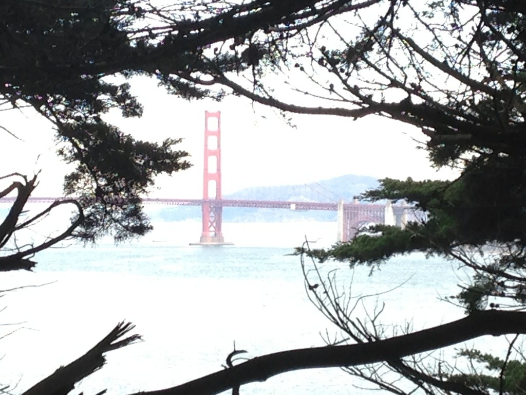 golden gate bridge nature